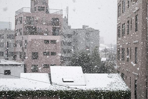 11月でこんな大雪なんて・・・今日の東京