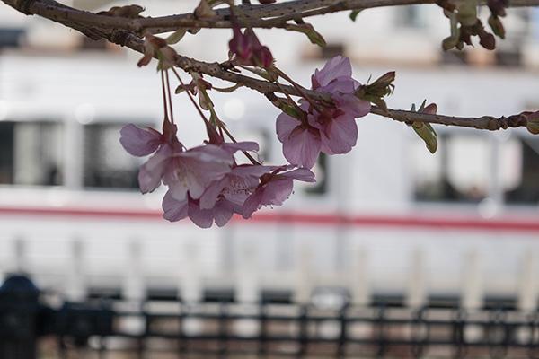 電車の見える公園、桜ごしの東武東上線