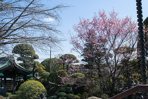 東京大仏がある乗蓮寺 2017年3月11日