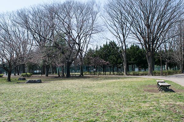 氷川台の城北公園 2017年 3月29日