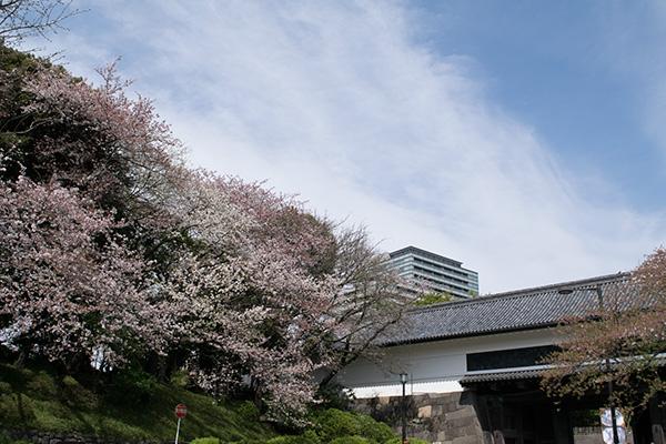 千鳥が淵公園の桜 2016年4月