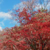 商売っ気ゼロの平林寺なら2018 紅葉が見頃、でも寒い、高い、不便!
