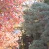 喜多院(川越)の紅葉・・・ところで喜多院って誰をフィーチャーしたお寺?