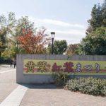 昭和記念公園 黄葉・紅葉まつり 見頃はまだだけどイベント 屋台がいっぱい