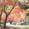 新宿御苑、紅葉キレイ。 混雑はしてますが桜の季節よりマシです