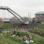 黒目川 花祭りの桜開花状況と混雑具合