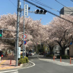 ららぽーと富士見への道中、桜の散りぎわが美しい・・・